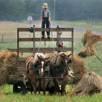 Kids on Amish farms are less likely to get asthma - a new study explains why