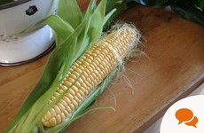 Grow it Yourself: Make your garden a little sweeter with some a-maize-ing corn