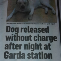It's all kicking off in Wicklow, if this headline is to be believed
