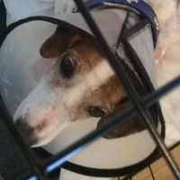 Chemicals thrown over two dogs in separate Cork attacks
