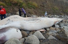 Public advised to stay away from dead whale beached at Killiney