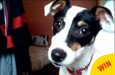A missing dog from Tallaght has just turned up safe and sound, NINE years later