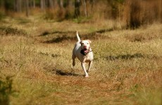 Hunter shot in buttocks - by his own dog