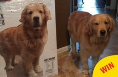 This mam made a cardboard cut out of the family dog for her son to take to college