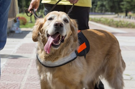 File photo of an assistance dog.