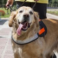 Teenage boy awarded €5,500 after management stops him bringing assistance dog to school