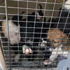 DSPCA slams 'horrific' puppy trafficking after 23 dogs are seized at Dublin Port