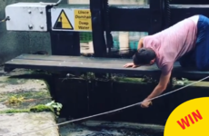 This hero came to the rescue when he noticed some baby ducks trapped in the Grand Canal