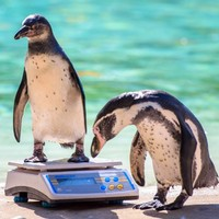 PHOTOS: London Zoo is doing its annual weigh-in