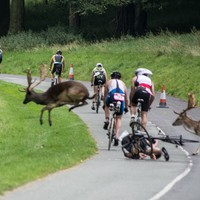Stag knocks cyclist off his bike during Phoenix Park race