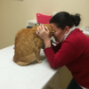 This cat was flown from Australia to its owner in Ireland thanks to kind strangers