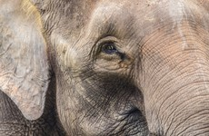 Two elephants accidentally electrocuted in India