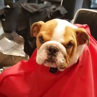 This barbers in Dublin has the most adorable dog hanging around the shop