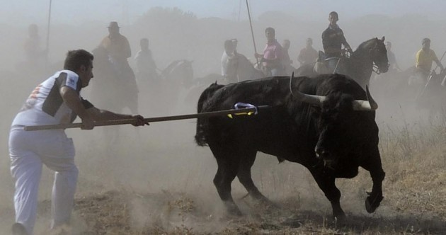 """""""Bastard politicians, respect traditions"""": Spanish townspeople protest bull-spearing ban"""