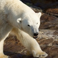 Russian scientists trapped in weather station for two weeks by polar bears