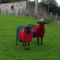 This lad made sure people know his sheep are supporting Mayo for Sam