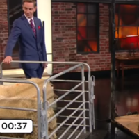 A sheep was sheared live on the Late Late last night and nobody is quite sure why