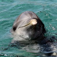 Call for more monitoring of super trawlers after dolphin deaths