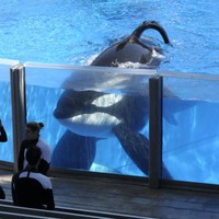 SeaWorld stock drops to all-time low after it ends killer whale shows