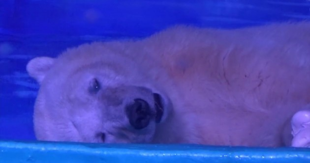 Shopping mall home to 'world's saddest bear' refuses wildlife park offer