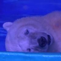 Shopping mall home to 'world's saddest bear' refuses wildlife park offer