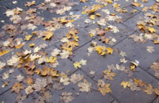 31 thoughts Irish people have when autumn starts to creep in