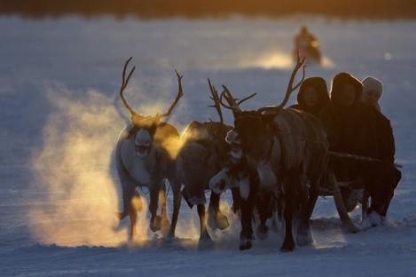 Nenets people ride in a reindeer sleigh during Reindeer Herder's Day in Nadym, Yamal-Nenets region in the Siberian north.