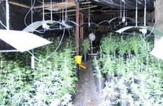 Nine arrested as drug dogs help sniff out €1.2 million worth of cannabis in planned raids