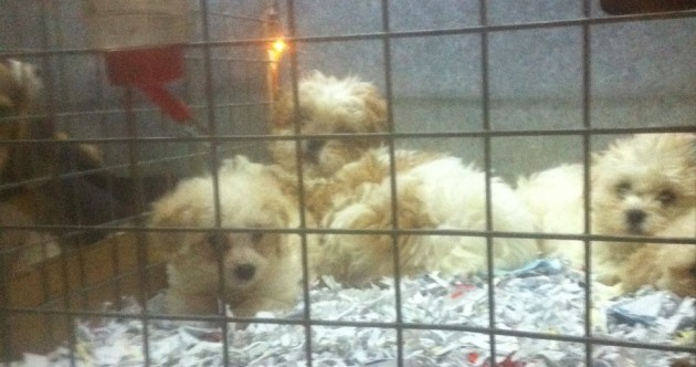 """Illegal dog breeding on an industrial scale is turning Ireland into the """"puppy farm capital"""""""
