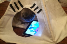 17 things that only make sense to cat people
