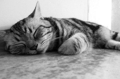 File photo of a sleeping cat.