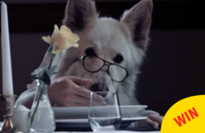 The Lough Inagh Lodge in Galway made a gas video to show they're dog friendly