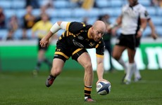 Stung rapid: Wasps destroy Zebre in 82-14 drubbing