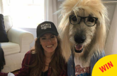 This woman and her dog just won Halloween, so everyone else can stop trying