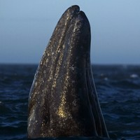The mystery of 'stinky whale' had people talking at the world whaling conference