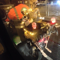 The coolest dog ever has been spotted cruising around Dublin this evening