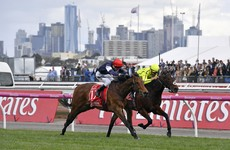 Heartbreak City for Irish horse as it's just pipped to the Melbourne Cup