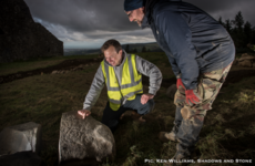 Major megalithic art find at Hellfire Club passage tomb