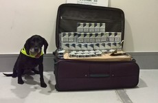 Detector dog helps seize 28,000 smuggled cigarettes at Dublin Airport