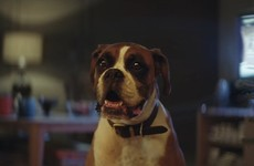 The John Lewis Christmas ad has just dropped and it stars Buster the dog