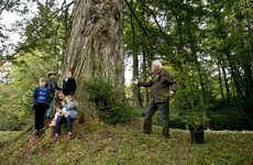 A giant redwood grove is being planted in Birr