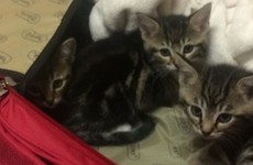 Gardaí warn pet owners to be responsible after finding abandoned kittens in suitcase