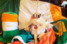 15 times Irish dogs were there to cheer you up in 2016