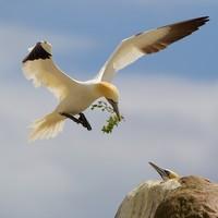 Top amateurs capture Ireland's natural beauty in 12 snapshots