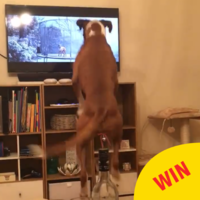 This boxer joyfully bouncing along to the John Lewis ad is going super viral on Facebook