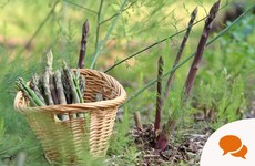 Spears at the ready: How to grow asparagus