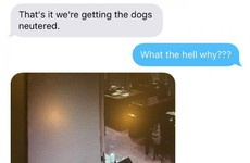 This mam put up cameras in her house, then regretted it once she saw what the dogs got up to