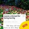This local news story from Wexford about leaves being 'too big' is excellent