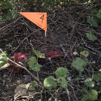 Anonymous tip leads Mexico police to 32 bodies and 4 human heads in mass graves