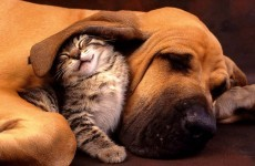 The burning question*: Cats or dogs?